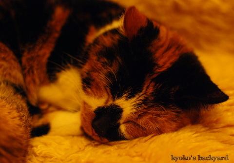 猫団子まであと1歩_b0253205_07425527.jpg
