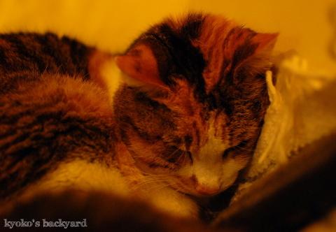猫団子まであと1歩_b0253205_07430581.jpg
