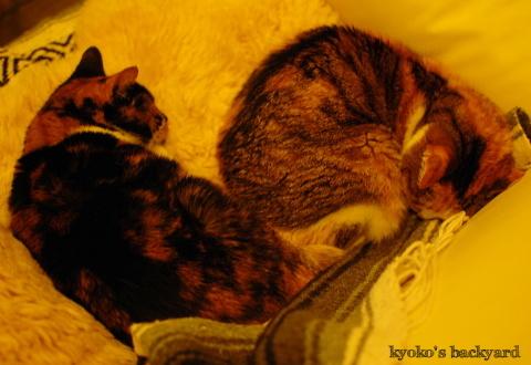 猫団子まであと1歩_b0253205_07431533.jpg