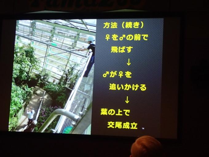 多摩動物公園             オガサワラシジミ飼育2017/12/09①_d0251807_07150723.jpg