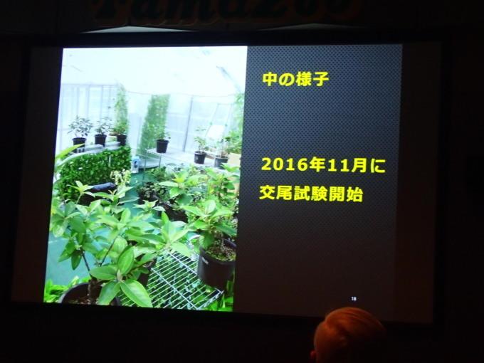 多摩動物公園             オガサワラシジミ飼育2017/12/09①_d0251807_07152509.jpg