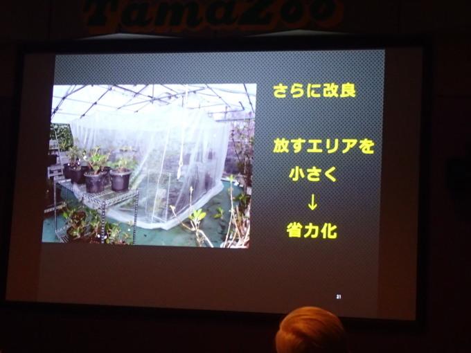 多摩動物公園             オガサワラシジミ飼育2017/12/09①_d0251807_07154128.jpg