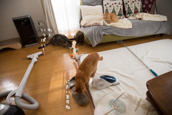 ソファの下から _d0355333_20113091.jpg