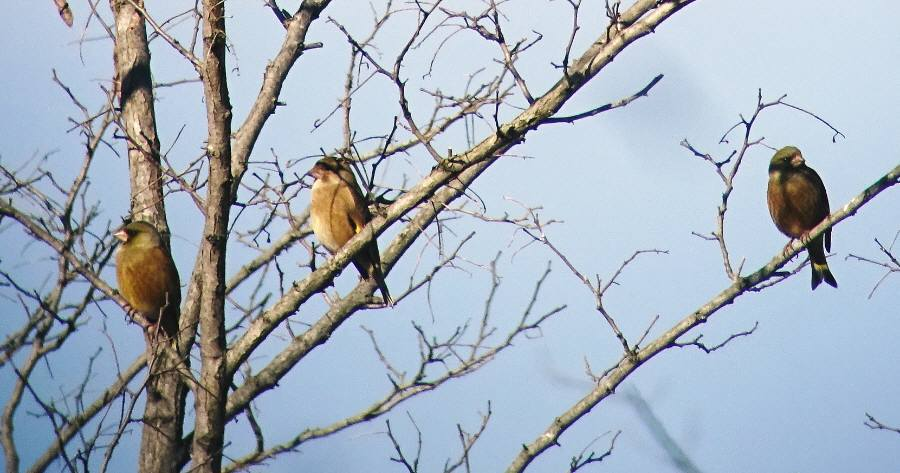 羽村堰周辺で野鳥観察会_f0059673_22431247.jpg
