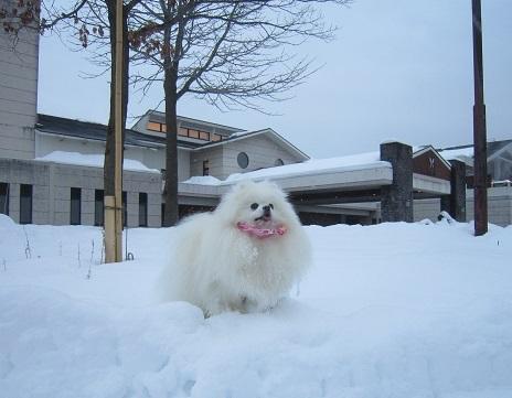 ヴィヴィの雪あそび(1)_b0177436_14175127.jpg