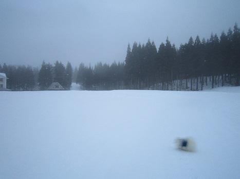 ヴィヴィの雪あそび(1)_b0177436_14183761.jpg