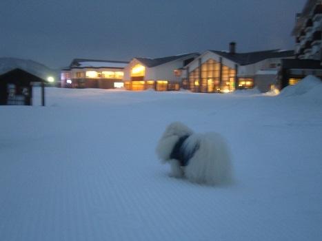 ヴィヴィの雪あそび(1)_b0177436_14194160.jpg