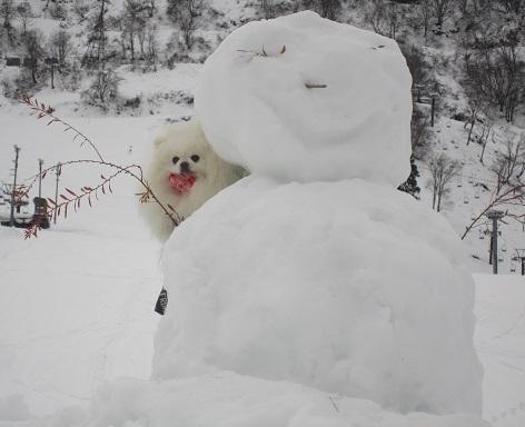 ヴィヴィの雪あそび(1)_b0177436_14200789.jpg