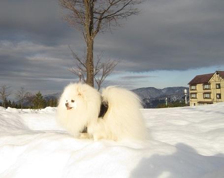 ヴィヴィの雪あそび(2)_b0177436_11291252.jpg