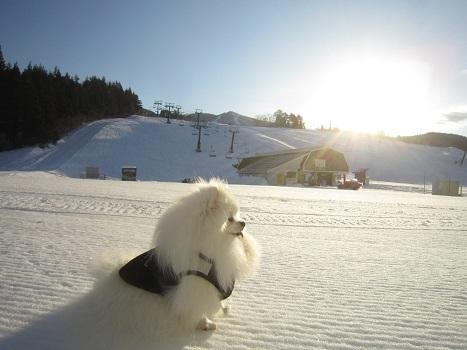 ヴィヴィの雪あそび(2)_b0177436_11301866.jpg