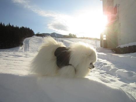 ヴィヴィの雪あそび(2)_b0177436_11311030.jpg