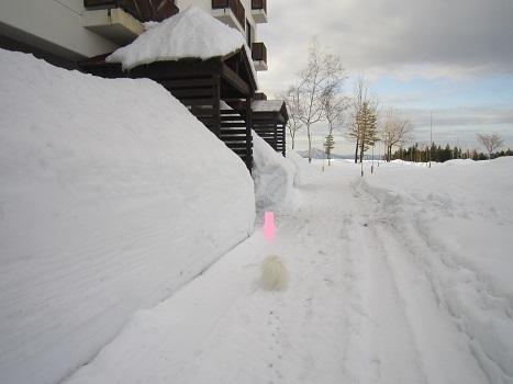ヴィヴィの雪あそび(2)_b0177436_11313307.jpg