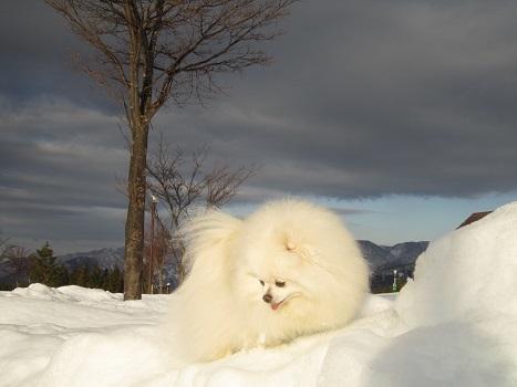 ヴィヴィの雪あそび(2)_b0177436_11322200.jpg