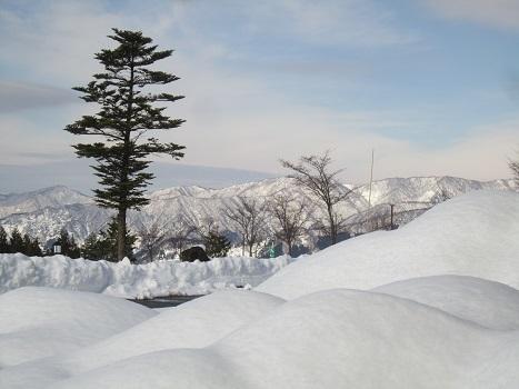 ヴィヴィの雪あそび(2)_b0177436_11340559.jpg