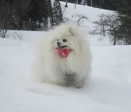 ヴィヴィの雪あそび(2)_b0177436_11364179.jpg