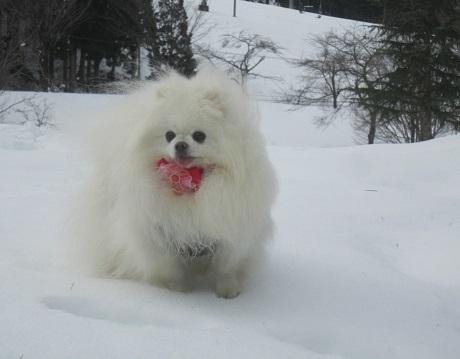 ヴィヴィの雪あそび(2)_b0177436_11372392.jpg