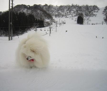 ヴィヴィの雪あそび(2)_b0177436_11374704.jpg