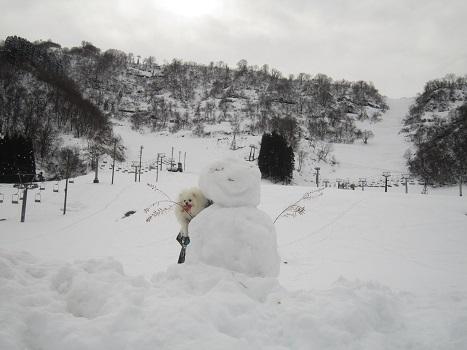 ヴィヴィの雪あそび(2)_b0177436_11383255.jpg