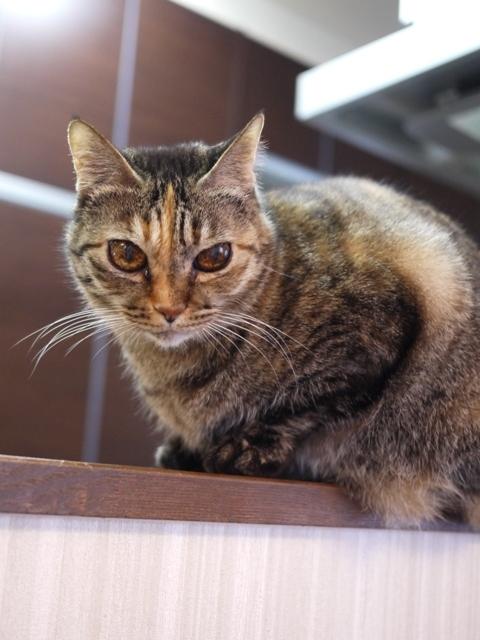 猫のお留守番 ワサビちゃん天ちゃん麦くん茶くん編。_a0143140_23150827.jpg