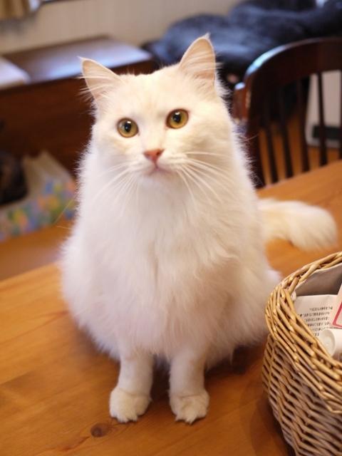 猫のお留守番 ワサビちゃん天ちゃん麦くん茶くん編。_a0143140_23160460.jpg