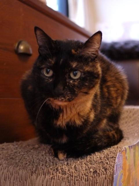 猫のお留守番 ワサビちゃん天ちゃん麦くん茶くん編。_a0143140_23191559.jpg