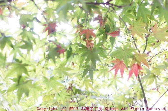 c0169360_12261211.jpg
