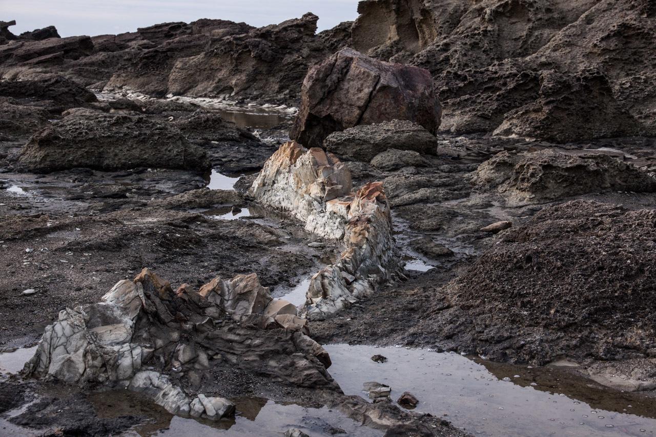 ハクガン 5  用心棒のヒシクイ 塩瀬崎灯台のゴジラ岩_a0052080_20411751.jpg