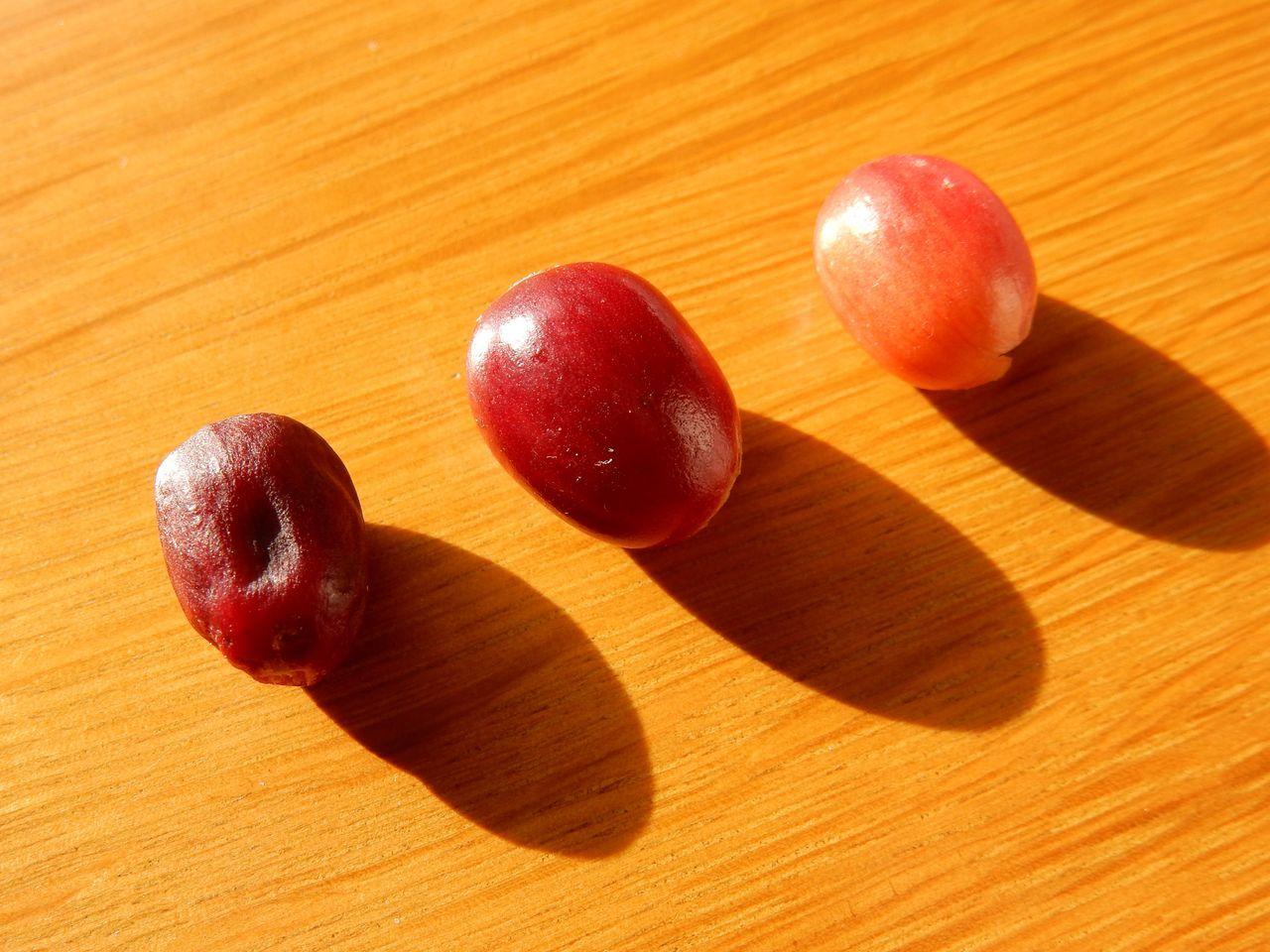 赤い一日(コーヒー収穫)_c0025115_21542356.jpg