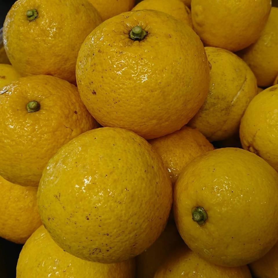 年末、年始のお知らせ、お歳暮作り、レモン、柚子、かぼす、冬の仕込み。_a0125419_08201939.jpg