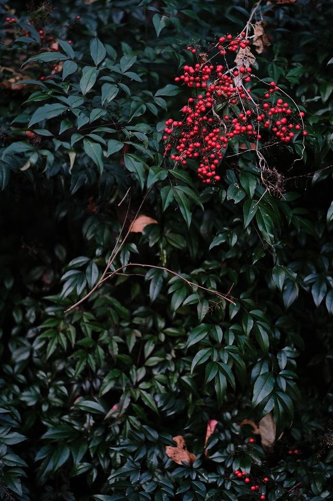 ワークショップ 小石川植物園_f0050534_08420389.jpg