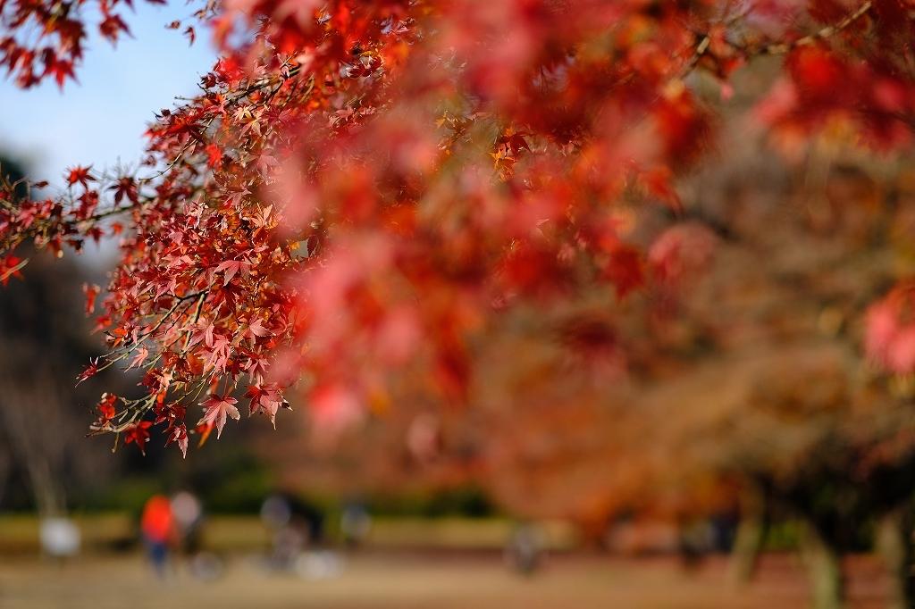 ワークショップ 小石川植物園_f0050534_08420430.jpg