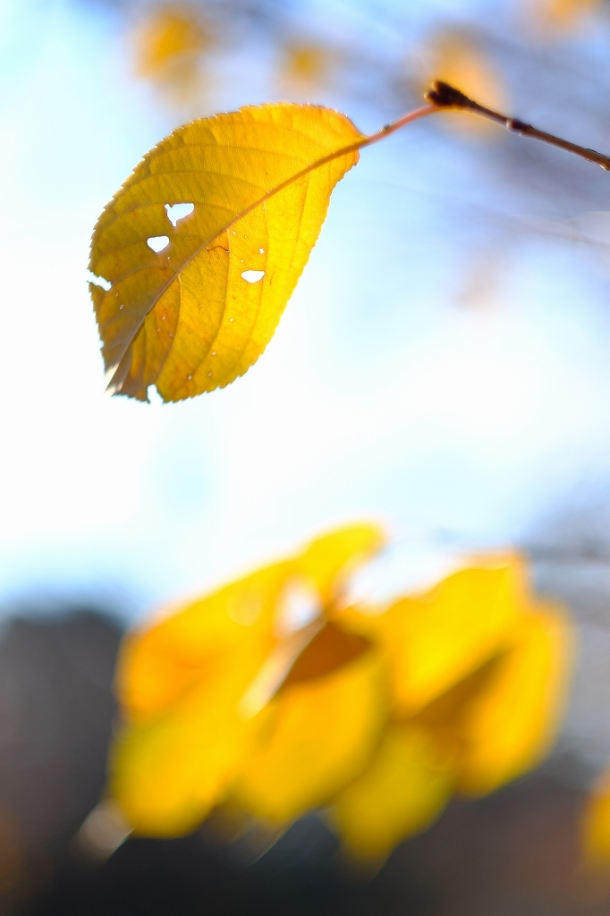 ワークショップ 小石川植物園_f0050534_08421676.jpg