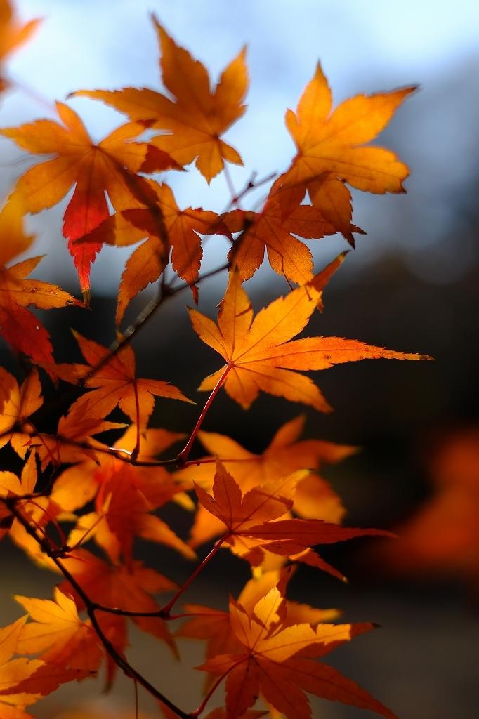 ワークショップ 小石川植物園_f0050534_08421703.jpg