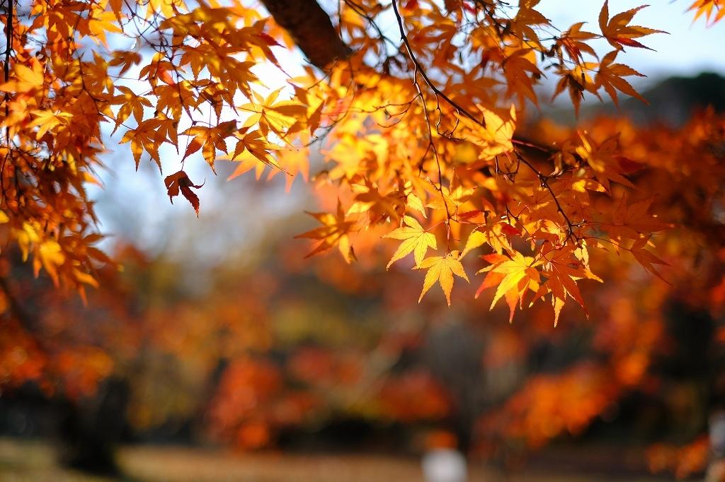 ワークショップ 小石川植物園_f0050534_08421773.jpg