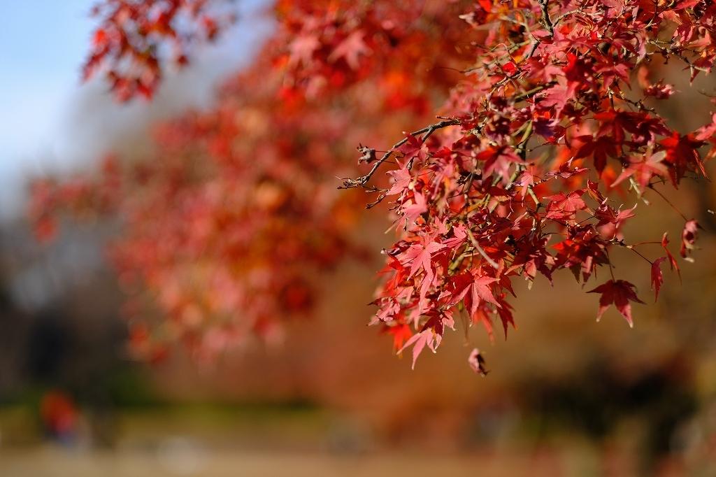 ワークショップ 小石川植物園_f0050534_08421892.jpg