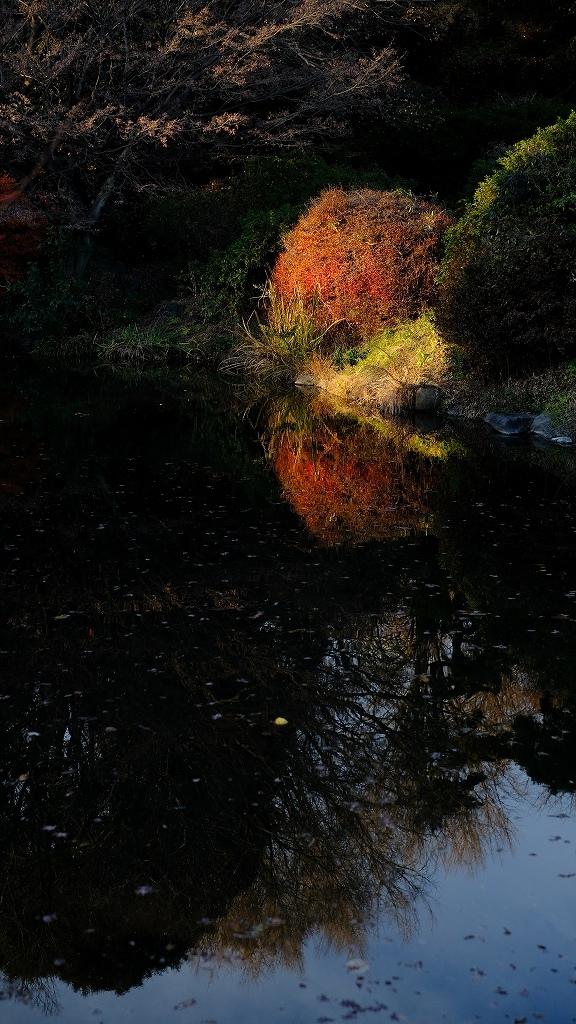 ワークショップ 小石川植物園_f0050534_08422952.jpg