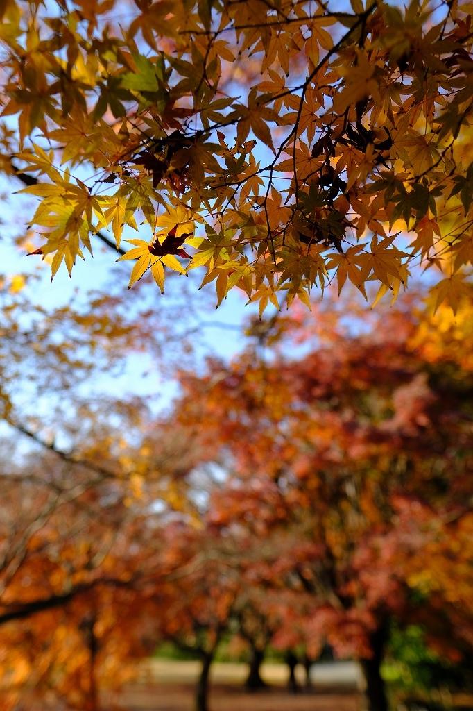 ワークショップ 小石川植物園_f0050534_08423893.jpg