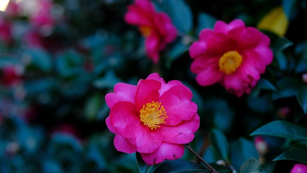 ワークショップ 小石川植物園_f0050534_08423954.jpg