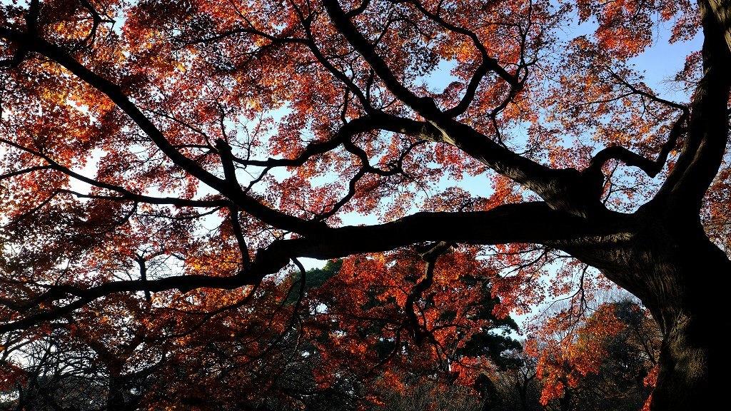 ワークショップ 小石川植物園_f0050534_08424757.jpg