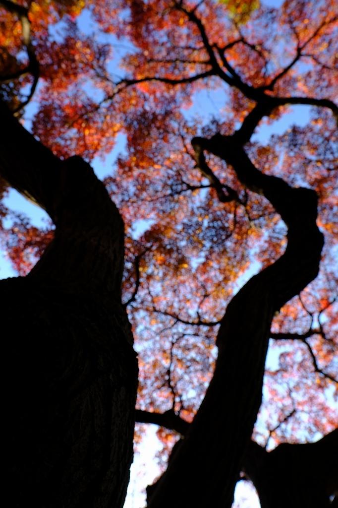 ワークショップ 小石川植物園_f0050534_08424771.jpg