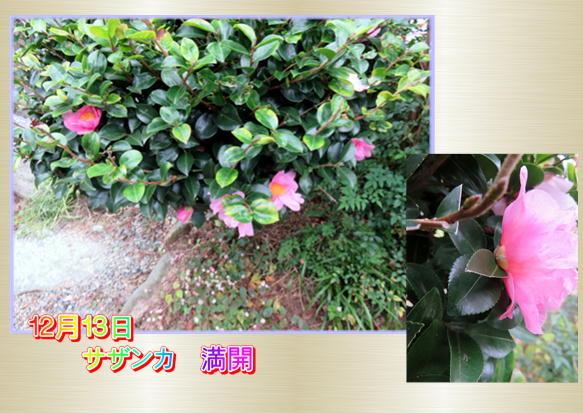 f0003174_10564487.jpg