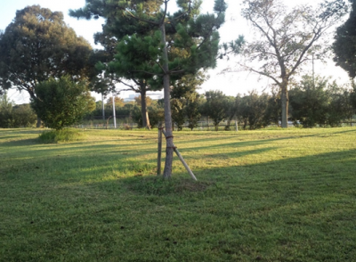 平成29年9月 ゴルフ場 管理作業 その2_d0338682_09301974.png