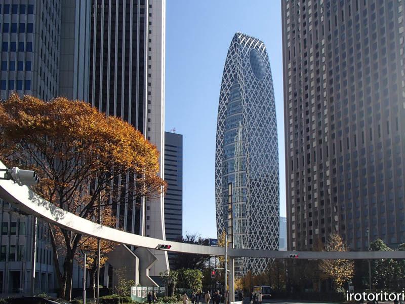 新宿です!!  (ワカケホンセイインコ)  2017/12/10_d0146592_00062870.jpg
