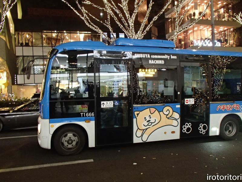 新宿です!!  (ワカケホンセイインコ)  2017/12/10_d0146592_00343216.jpg