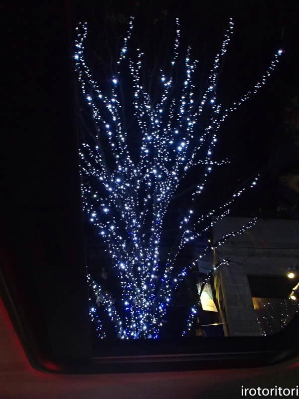 新宿です!!  (ワカケホンセイインコ)  2017/12/10_d0146592_00371272.jpg