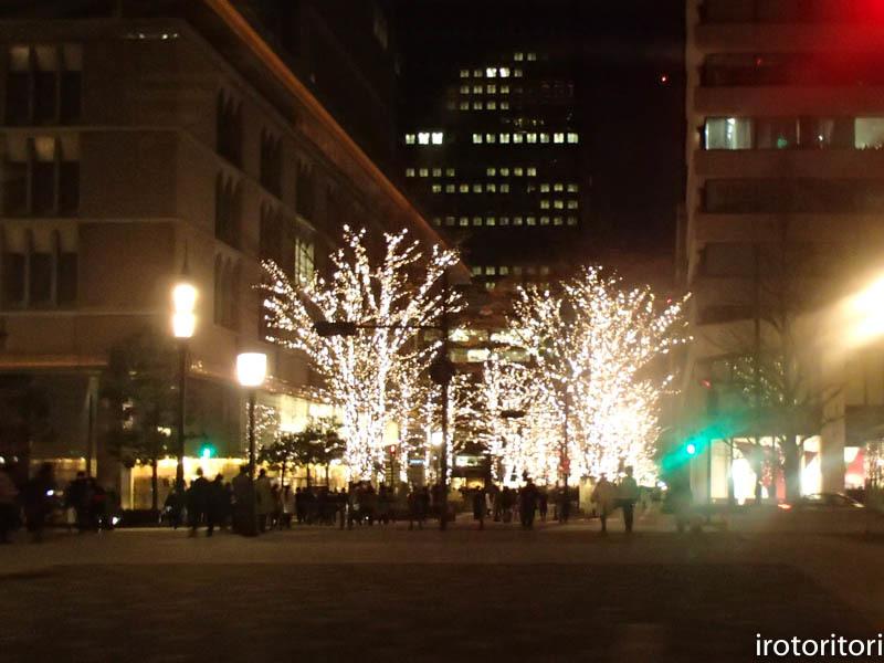新宿です!!  (ワカケホンセイインコ)  2017/12/10_d0146592_00383636.jpg