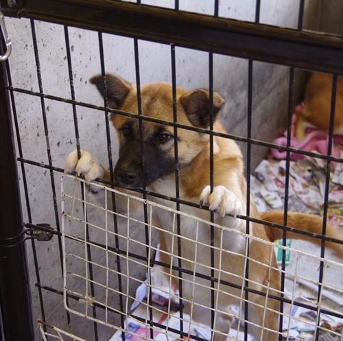 12/12センターレポート 子犬舎     10頭_f0078320_00191153.jpg