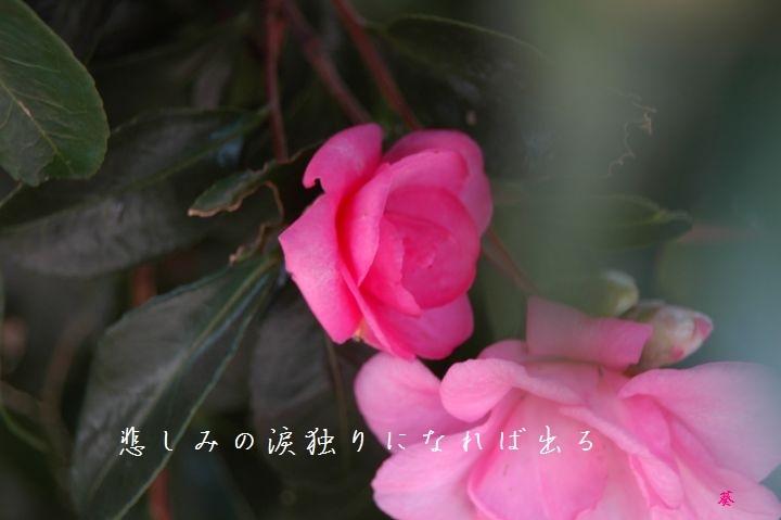 f0379160_15030389.jpg