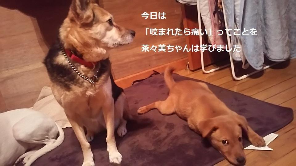 陽葉ちゃんがライバル!!(茶々美)_f0242002_23482645.jpg