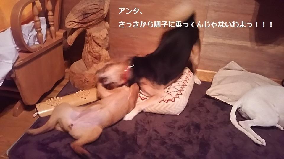 陽葉ちゃんがライバル!!(茶々美)_f0242002_23485637.jpg